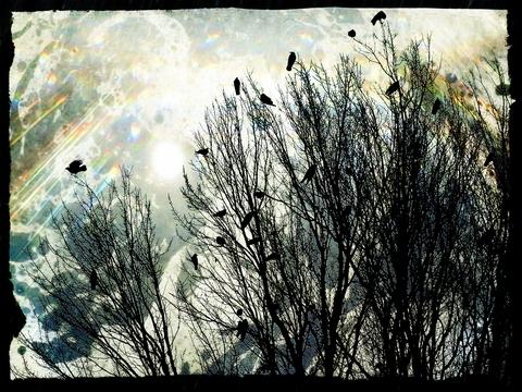 Crows_jpg_480x1000_q100