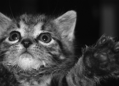 Kitty_Pat_jpg_480x1000_q100