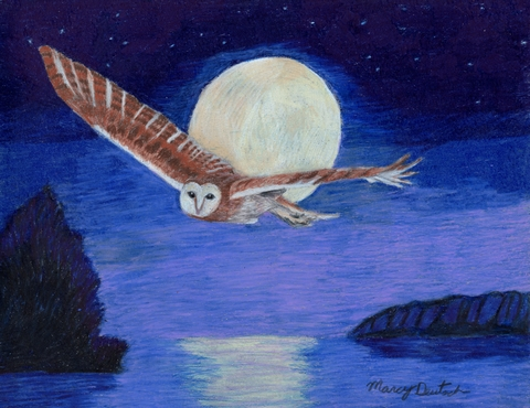 MD_barnowlflyingatnight300a_jpg_480x1000_q100