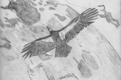 DW_eagle_flies_jpg_480x1000_q100