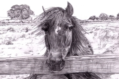 FA_horse_jpg_480x1000_q100
