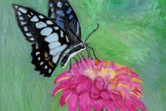 MDeutsch__bluemorphbutterflyonflower300a_jpg_480x1000_q100