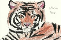 Tiger_jpg_480x1000_q100