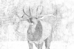 Wheeler, David--Elk - Autism Artism 2017