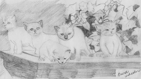 DW_Kittens_jpg_480x1000_q100