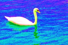 NG_Lake_Swan_jpg_480x1000_q100