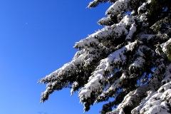 Winter_Branches_jpg_480x1000_q100