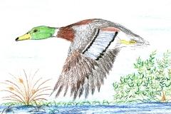 green_duck_jpg_480x1000_q100